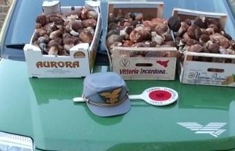 Photo of Lacco Ameno, sequestrati 25 kg di funghi: non erano tracciabili
