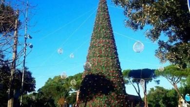 Photo of Natale, Ischia e l'albero della discordia