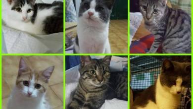 """Photo of Lotteria di Natale pro sterilizzazioni: arriva la """"riffa"""" per i gatti randagi"""