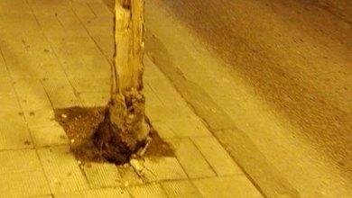 Photo of Via Antonio Sogliuzzo: a quando la rimozione dell'albero sradicato?