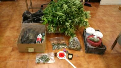 Photo of Coltivatori di marijuana beccati a arrestati dai carabinieri