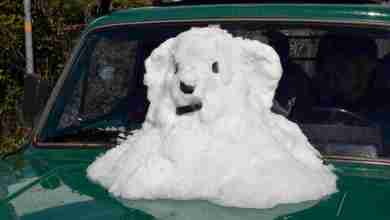 """Photo of Ischia mai così """"bianca"""", è stata una nevicata storica"""