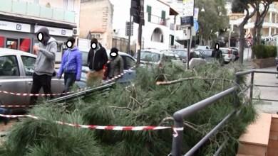 Photo of Lacco Ameno, pino cede e crolla sulla strada