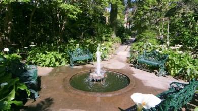 Photo of I Giardini La Mortella riaprono al pubblico nel weekend pasquale