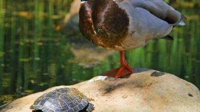Photo of Quanto ha senso parlare ancora di rettili e uccelli?