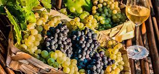 Photo of Andar per cantine, dal 15 al 23 settembre Ischia racconta i suoi vini