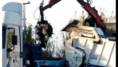 Photo of Forio, i rifiuti tornano a Zaro: il video