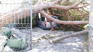 """Photo of Raffiche di vento e danni ovunque, l'isola """"ferita"""""""