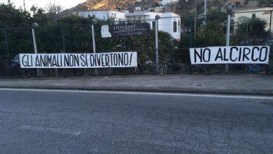 """Photo of A Fondobosso lo striscione contro il circo: """"Gli animali non si divertono"""""""