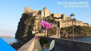 Photo of SOLIDARIETA' Orchidea Unicef 2019, stamane appuntamento a Ischia Ponte