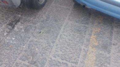 Photo of Panza, nessun rispetto per i disabili: auto sulle strisce gialle senza badge