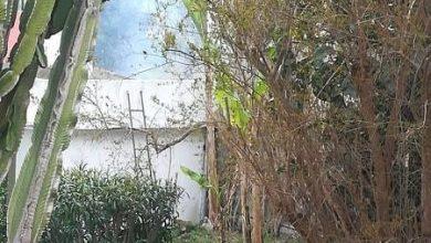 Photo of Inciviltà in salsa ischitana, roghi a pochi metri dalla scuola