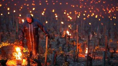 Photo of Maledetta primavera! Vino e agricoltura, ecco le conseguenze del meteo impazzito