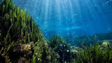 """Photo of """"Un tuffo nel mare che cambia"""", a Ischia il seminario su clima e mare"""