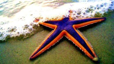 Photo of Lucilla, una stella marina che voleva volare dallo scoglio del gabbiano