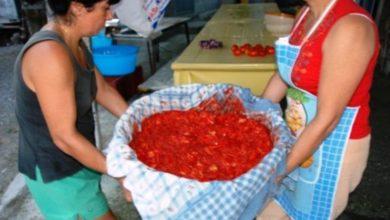 """Photo of Si  riaccende la vecchia passione per le bottiglie di pomodoro Un'allegra tradizione vissuta in tutta l'isola come una """"festa"""""""