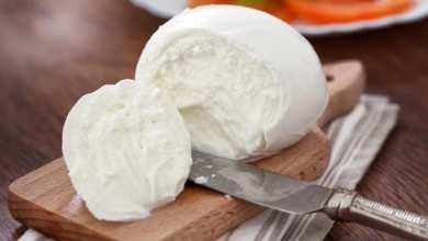 Photo of Mozzarella di Bufala Dop, l'oro bianco della Campania diventa protagonista della cucina sostenibile di qualità