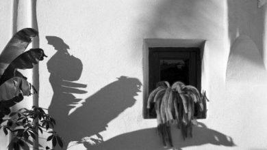 Photo of Il volto più autentico di Ischia in mostra al PAN