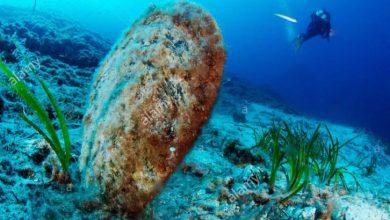"""Photo of Pinna nobilis a rischio estinzione! Dalla SZ """"A. Dohrn' di Ischia  una task force per salvare la specie da un parassita killer"""