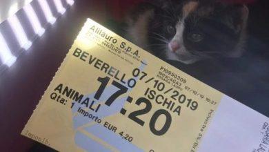 Photo of IL CASO Trasporti marittimi, con il gatto in aliscafo il salasso è assicurato