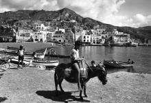 Photo of Ischia,la favolosa vendemmia del 1968!