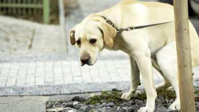 """Photo of IL CASO Deiezioni canine, a Forio è allarme """"randagi domestici"""""""