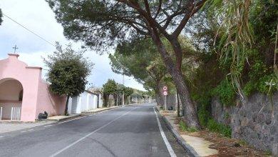 Photo of ISCHIA IN 3 P: PAESI, PAESAGGI & PERSONE La bellezza degli alberi nel cuore dei paesaggi