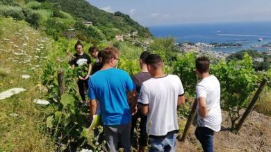 Photo of L'Istituto Agrario fa il boom mentre Ischia sta a guardare
