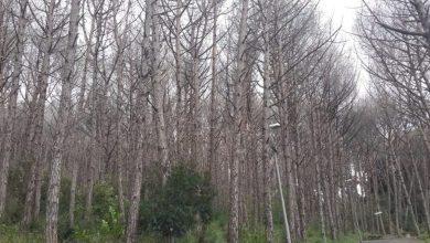 Photo of Maddalena, lecci e corbezzoli per ridare vita al bosco