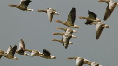 Photo of A Ischia il primo corso di Birdwatching ed avvicinamento all'ornitologia