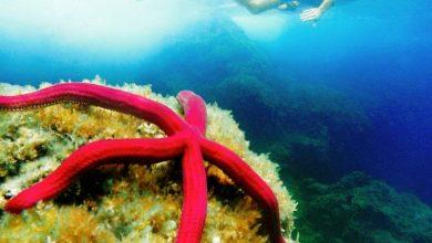 Photo of Calmata sottomarina e mare silenzioso, tutto merito dell' epidemico coronavirus i polipi escono dalle loro tane ed avvertono la strana atmosfera che li circonda