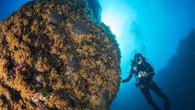 Photo of Regno di Nettuno, dal corallo rosso alle gorgonie: il Blueblitz esalta il mare di Ischia