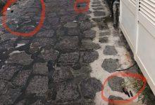 Photo of LO DICO A IL GOLFO Basta con i bisogni dei cani per strada