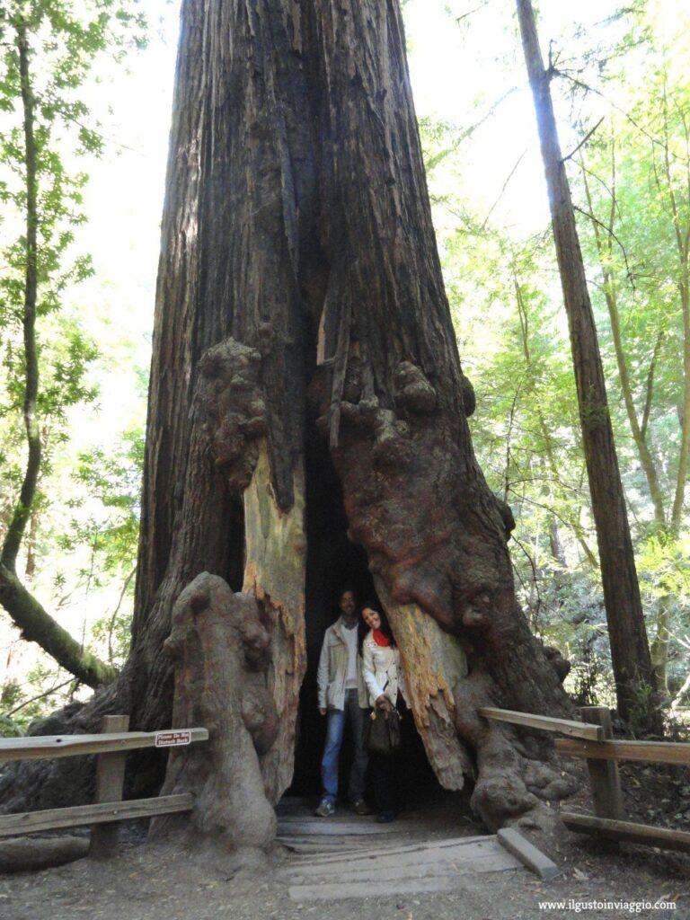 general sherman, muir woods national monument, sequoie san francisco, sequoie del muir woods, california redwood
