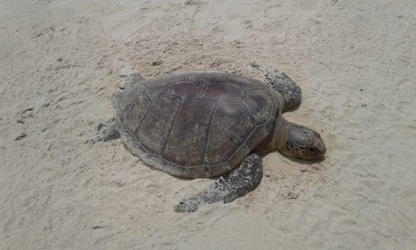 Tartaruga é encontrada morta em Ilhéus 1