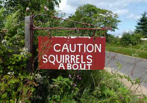 Caution: Squirrels About