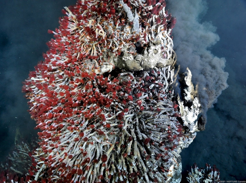Better Together: Symbiotic Relationships in the Sea illinois science council blog