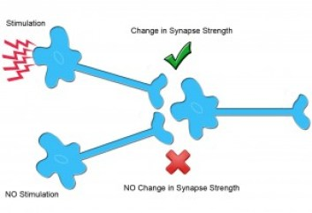 Synaptic Plasticity can my brain get too full