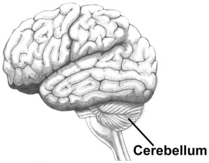 brain games cerebellum science cocktail