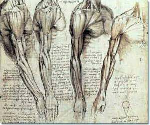 da Vinci arm anatomy sketch