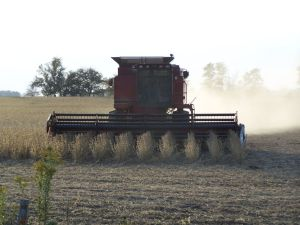 A soybean combine harvester soybean genetics