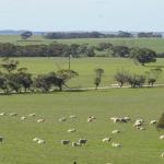 Illoura 2017 Flock Ram Catalogue now online