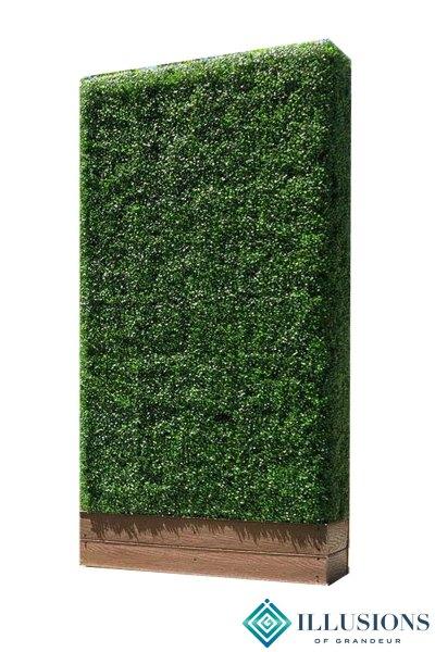 Boxwood Hedges