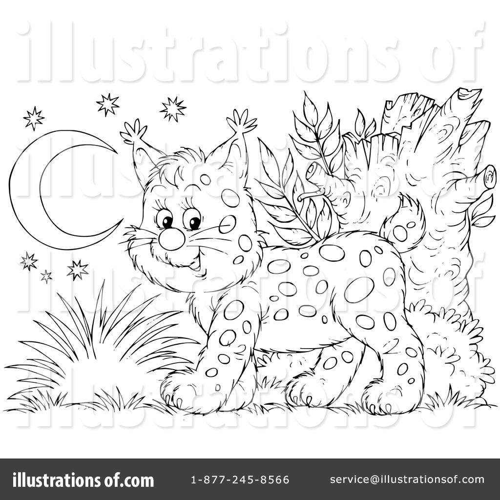 Bobcat Clipart