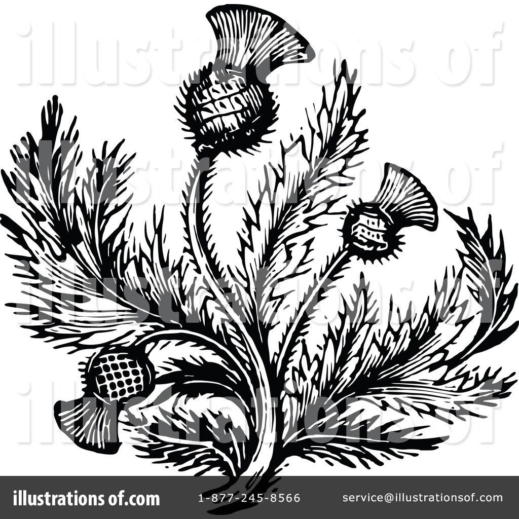 Thistle Clipart