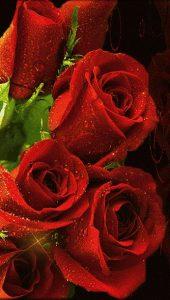 Scegli La Tua Rosa Rossa Il Magico Mondo Dei Sogni