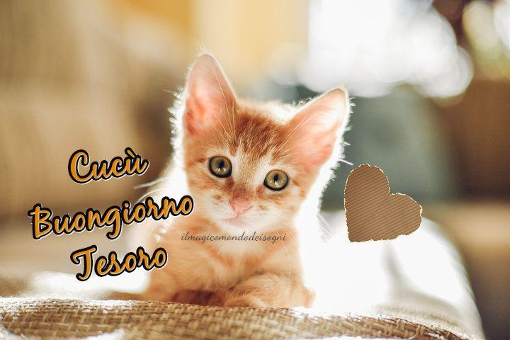 Cartoline Buongiorno Gatti Il Magico Mondo Dei Sogni