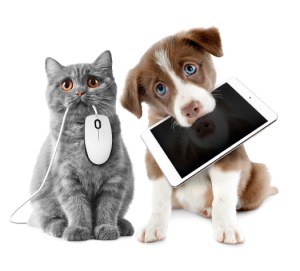 Dog Cat sweet