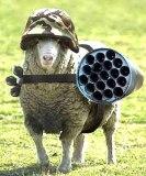 Meglio un giorno da leone che cento a pecora? Le pecore di ribellano.
