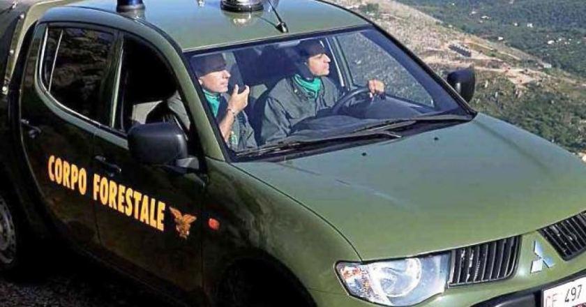 Corpo forestale Sicilia, via libera ad atto di interpello per 100 agenti